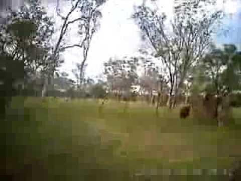 Bullcatching Far North Queensland