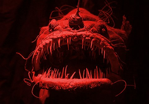 A Song About An Anglerfish