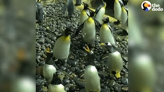 Penguins Are Having SO Much Fun With These Bubbles | The Dodo