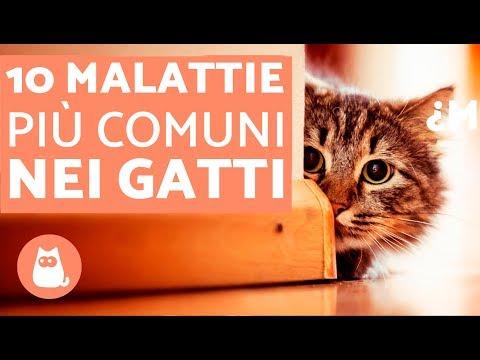 10 MALATTIE più comuni nei gatti