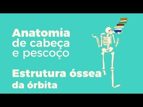 Anatomia De Cabeça E Pescoço Estrutura óssea Da órbita
