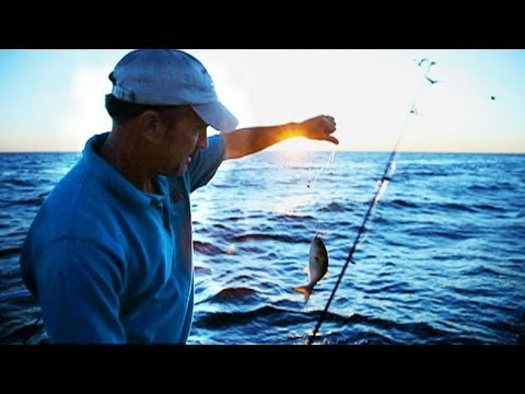 Earth Focus Episode 40 - Menhaden: The Most Important Fish in the Bay