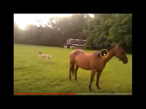 Deer Runs Around A Horse - Discussing CWD In Deer