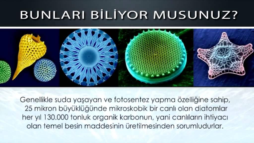Diatomlar