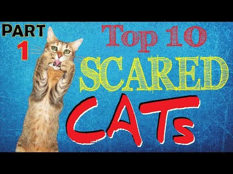 Best Scared Cats Compilation Part 1 ⚠ TOP 10 Funniest Scared Jumping Cats ⚠ Funny Cats
