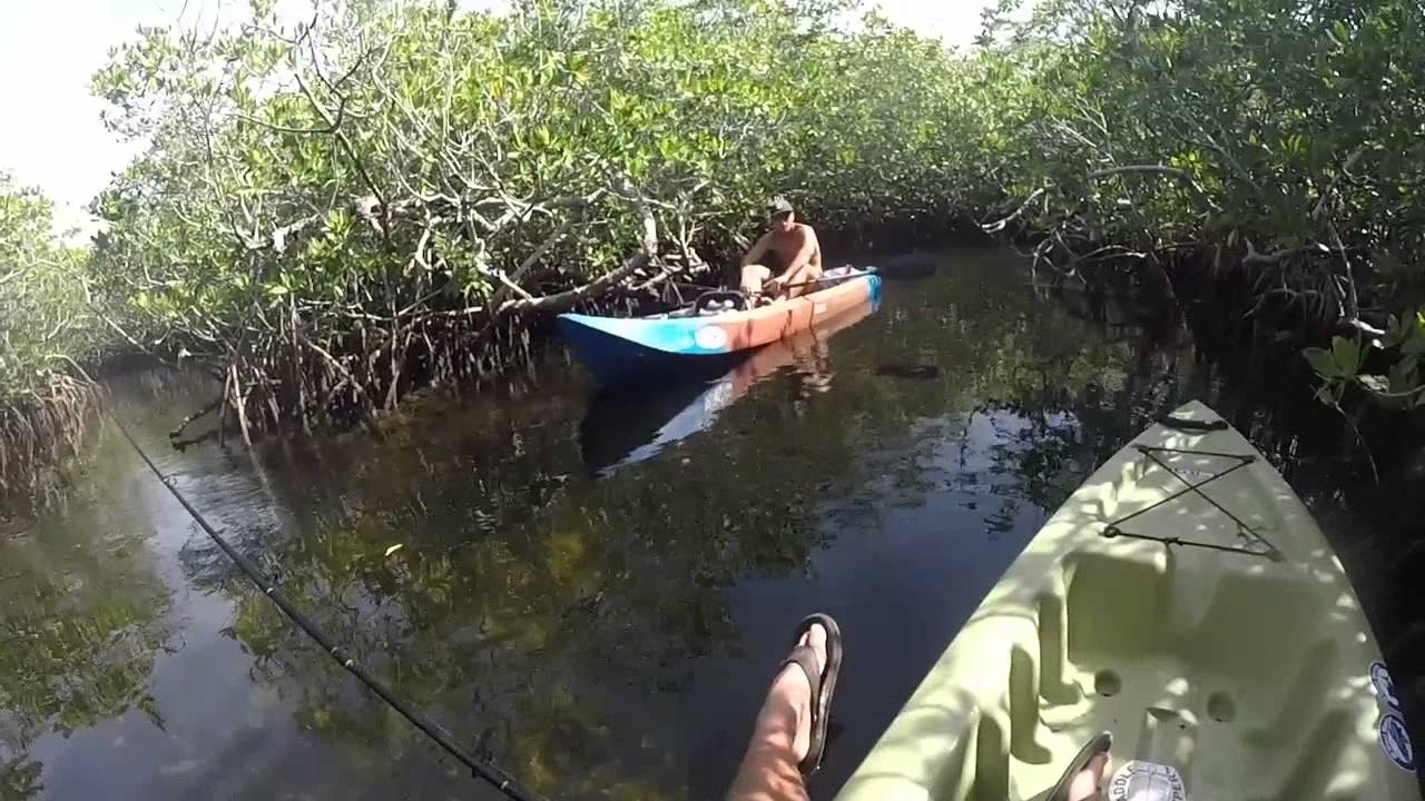 Florida keys mangrove fishing youtube for Out of state fishing license florida