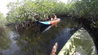 Florida Keys Mangrove Fishing