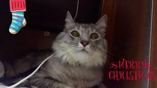 Кот в поезде, как перевезти животное в поезде