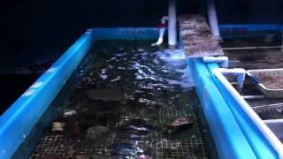 Sally Jo's advanced coral farming