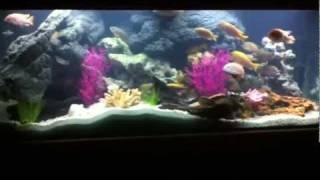 Cichlid Aquarium w/CaribSea Sand & Puka Shell