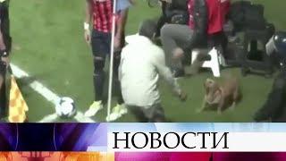 ВАргентине футбольный матч прервали из-за собаки.