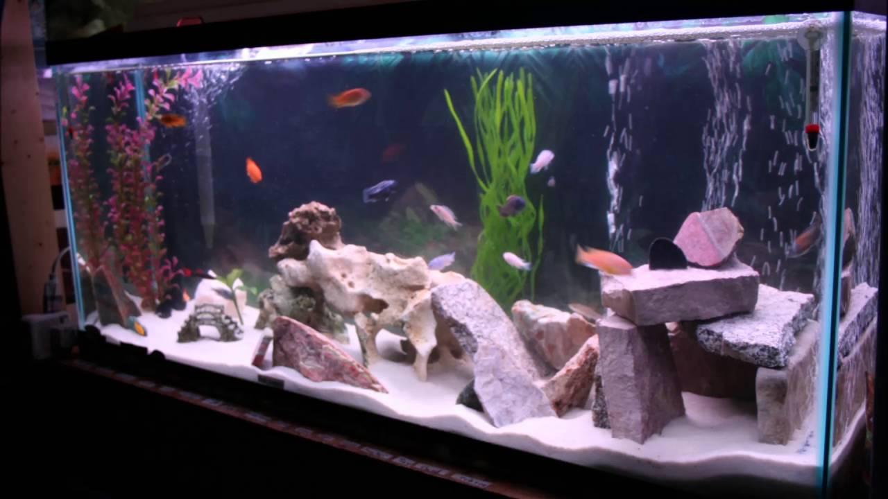 Creative Beautiful Home Office Aquariums