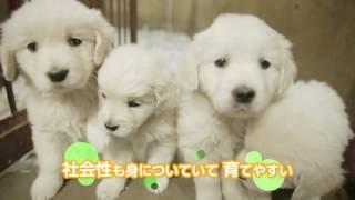 愛犬ハウスセキノを紹介する動画です!