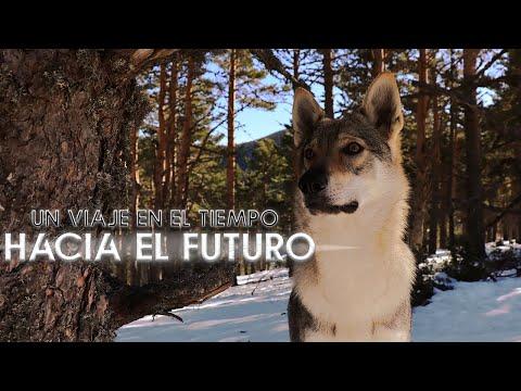 Visión de un futuro - DESPUÉS DE LA PANDEMIA