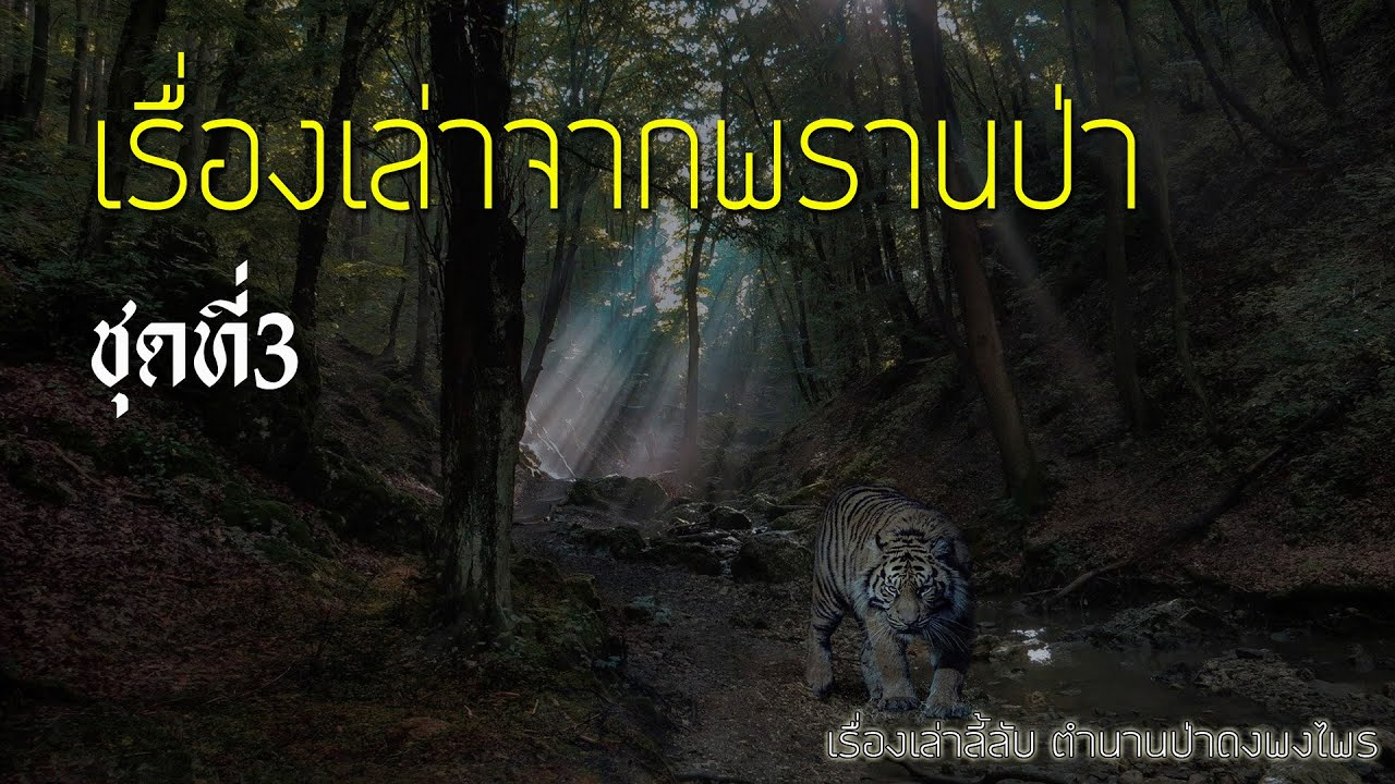 รวมเรื่องเล่าจากพรานป่า ชุดที่ 3 (ฟังยาวๆต่อเนื่อง 5 ชั่วโมง)