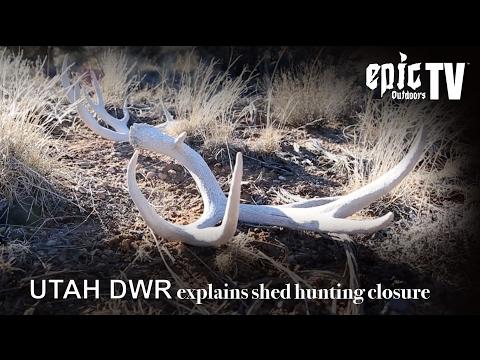 Utah DWR Explains Shed Hunting Closure