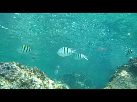 Explore the Virgin Islands: Underwater Video, Coki Point, St. Thomas