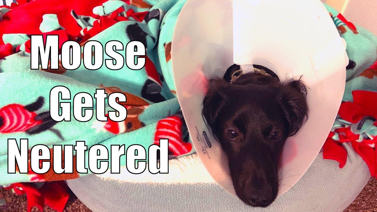 DOG NEUTER: My Dog's Neuter Surgery Experience and ...