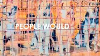 Save the street dogs in Rumania! [video made by NessiexCullen]