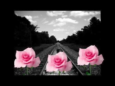 güz gülleri Hakan TAŞIYAN