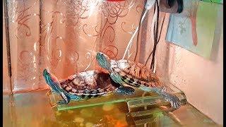 Красноухие черепахи. Попытка побега, наблюдение за черепахами