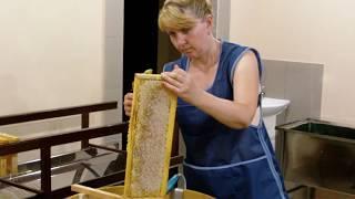 Качаем мёд  в цеху 2017