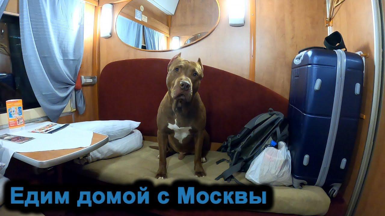 Едим со Спайком с Москвы домой. 5 и последняя часть! Первый канал/Питбуль/видели видео/Спайк.