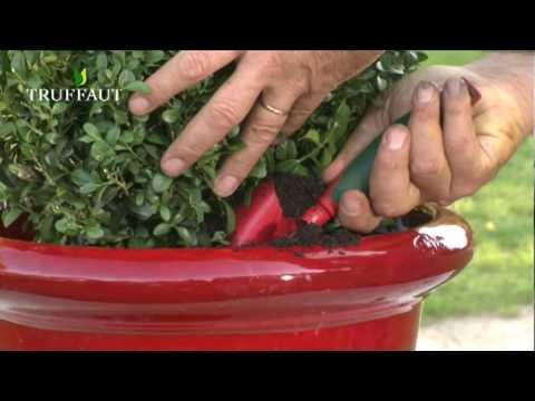 Comment planter un arbuste en pot jardinerie truffaut for Comment arroser un rosier en pot