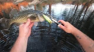 Murray cod fishing ACCEPT NO DONUTS!