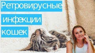 Ретровирусные #инфекции у кошек. [#YouTube_ветеринарные_курсы)