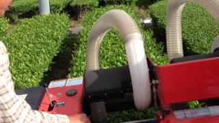 2013年お茶収穫03【自然のわ研究会】 乗用お茶刈り機の上からの風景