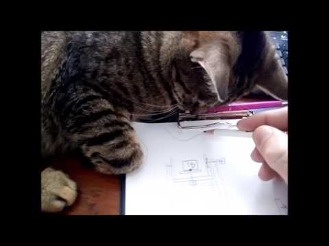 Lia - the cat assistant