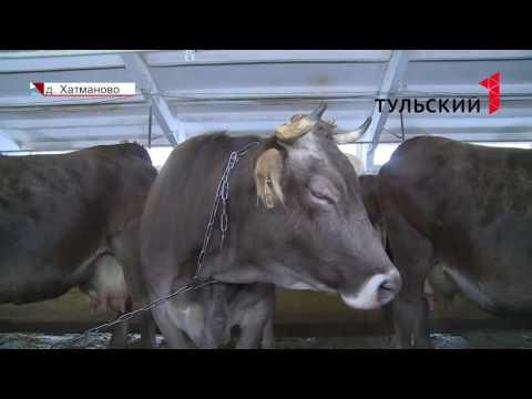 Сколько стоит домашнее молоко на ферме в Алексине