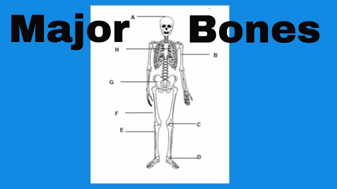 Learn The Bones Of The Human Body Youtube