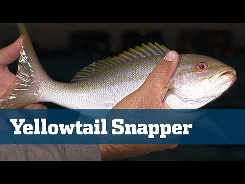Florida Sport Fishing TV - Snapper & Reef Fishing Tackle Tips Techniques - Season 05 Episode 07