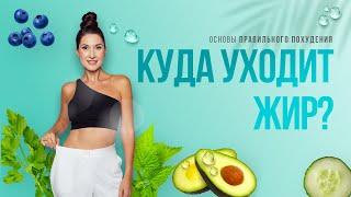 Правильное похудение. УЗНАЙ, куда уходит ЖИР. ХУДЕЙ ЛЕГКО ✌