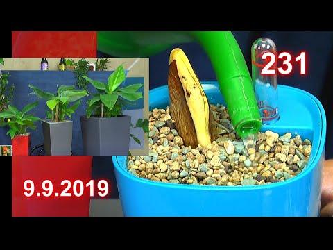 Welt der Wunder im Garten der Exoten im Haus entdecken die Raubmilben Bananen Stauden und andere Pfl