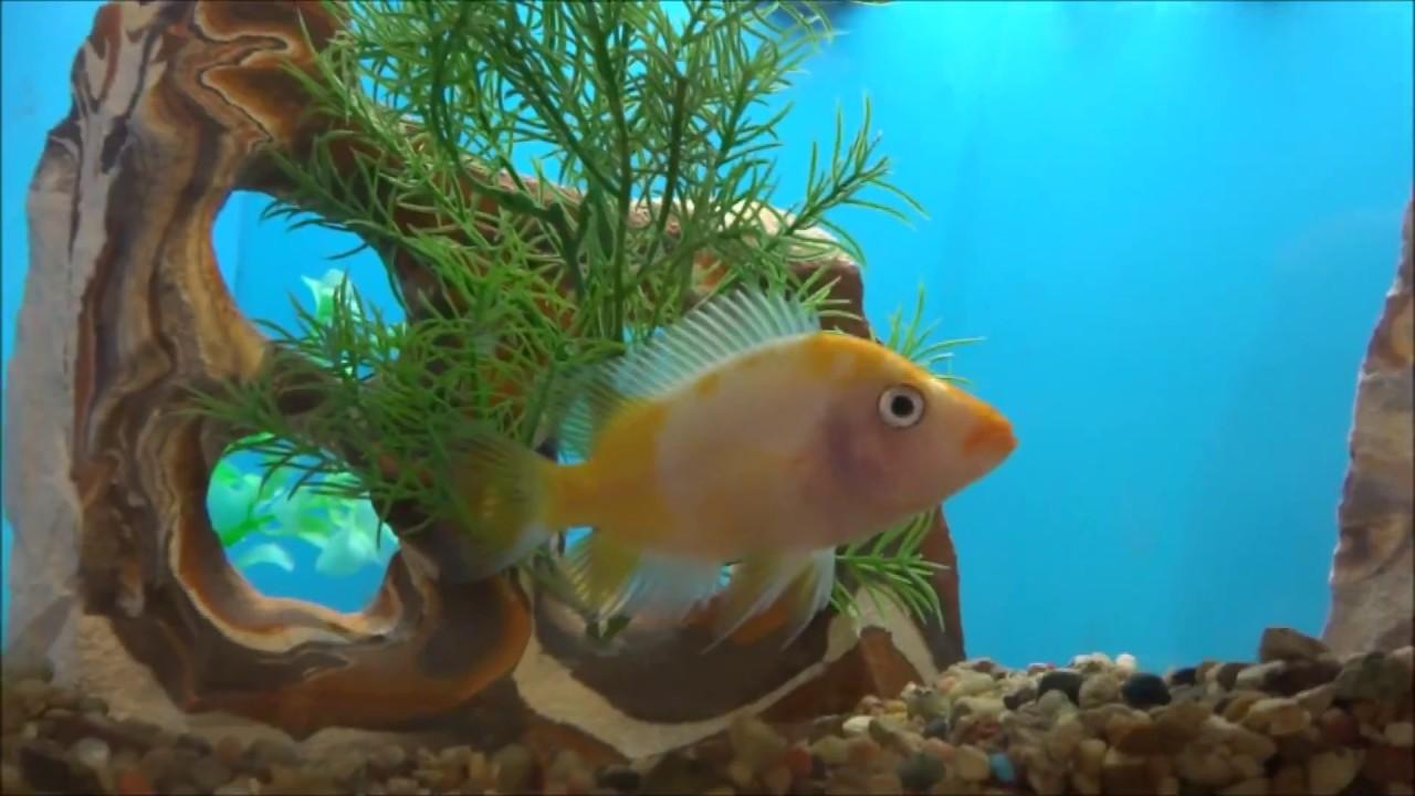 Freshwater fish for aquarium petsmart - Petsmart Fish Aquariums Rossford Oh 2017