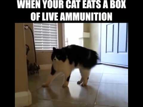 When Your Cat Eats a Box of Live Ammo