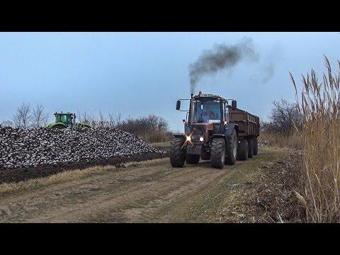 Sugar Beet Transport - 14x John Deere Tractors + MTZ 1025.2 + CLAAS + CASE (Cukorrépa szállítás)