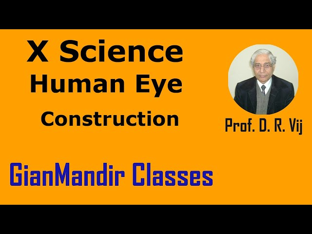 X Science | Human Eye | Construction by Amrinder Sir