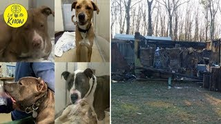Tragic Fire In A No Kill Shelter Kills 56 Dogs And Cats…Help Needed