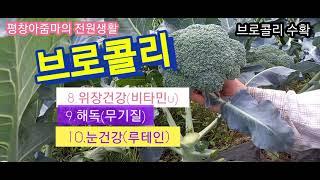 브로콜리 수확10가지효능 놀라운 슈퍼푸드.항암효과
