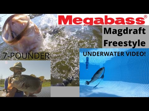 Megabass Magdraft Freestyle Underwater Video Plus Cast To Catch 7 Pounder!