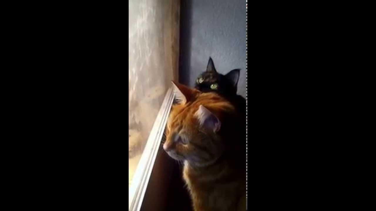 Kino Cats
