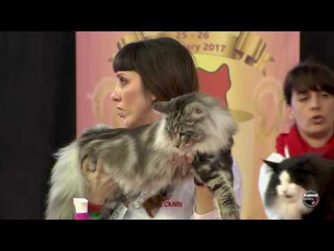 Mediterranean Winner Show 2017 - BIS Cat 2