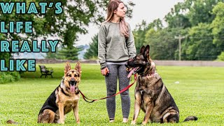 Morning Till Dark - A Full Day in the Life with Our German Shepherds