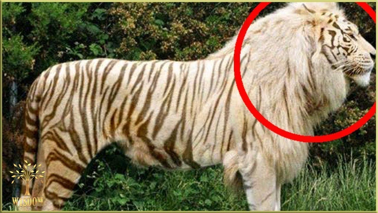 TOP 8 ANIMALE HIBRIDE INCREDIBILE!