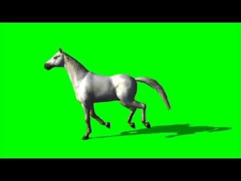 Horse Free Green Screen Animation - free green screen footage - white horse