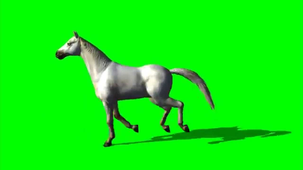 Horse Free Green Screen Animation - free green screen footage ... for Animation Horse Running  589hul